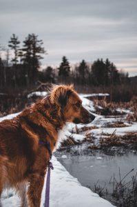 brown dog on leash near lake
