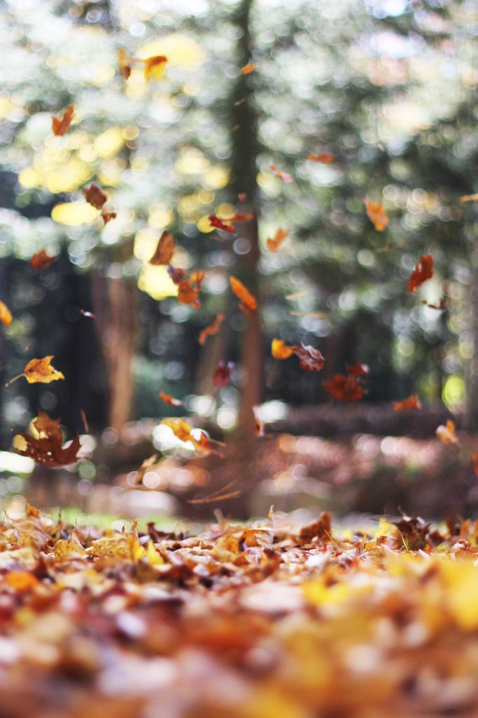 Red, Yellow, and Brown Leaves falling onto ground